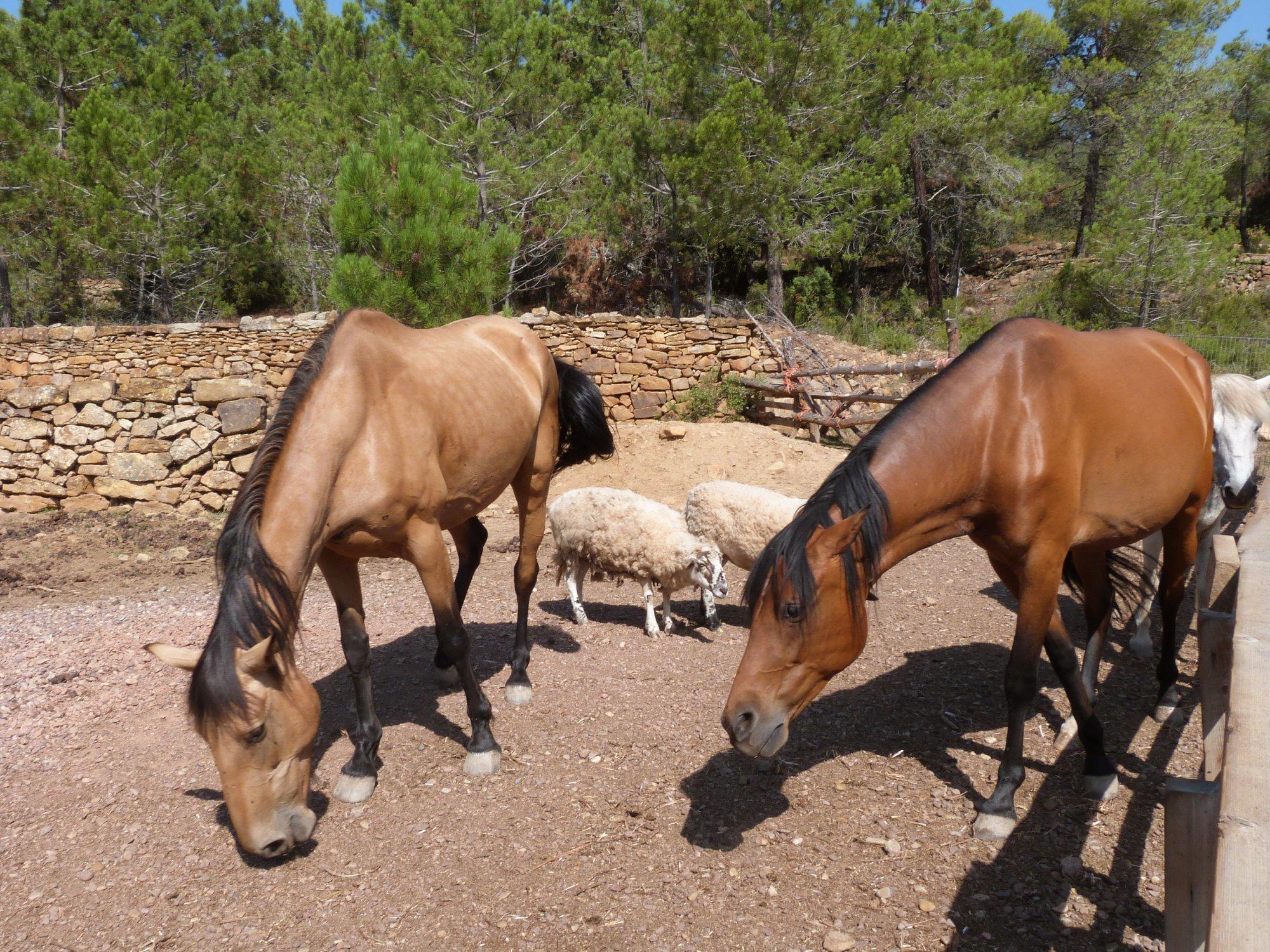 Arcadia recauda un 20% más en su campaña para alimentar a sus caballos