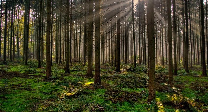 Plantan 650 árboles para compensar 90 toneladas de CO2