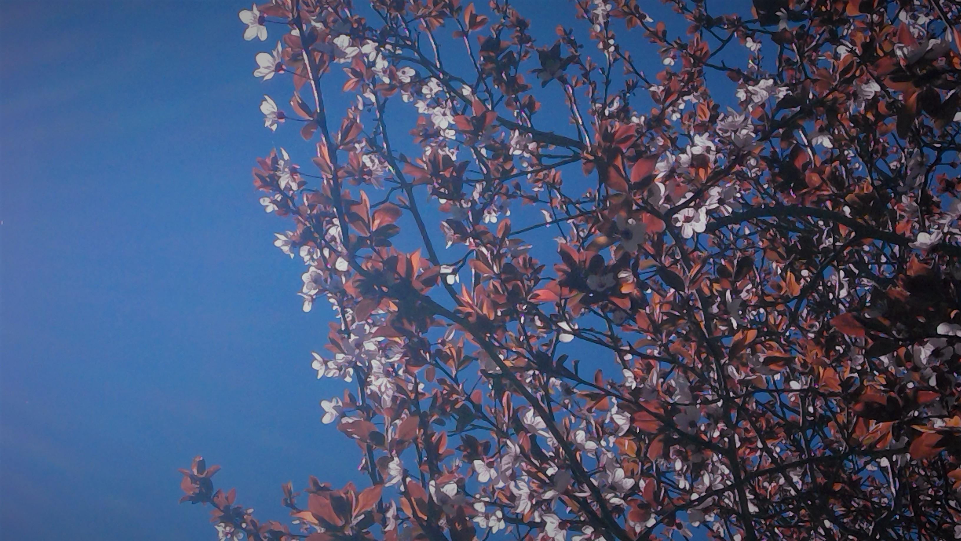 Arbolap: conocer los árboles con el móvil