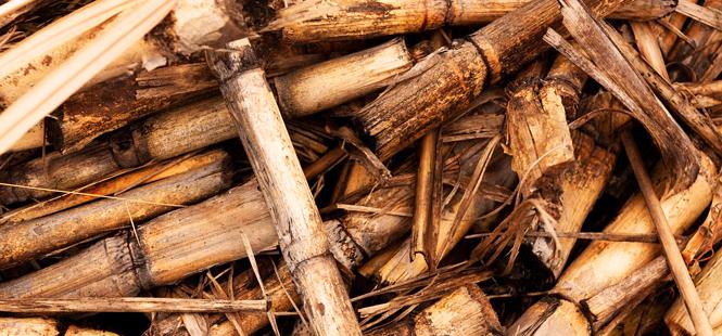 Un negocio llamado biomasa