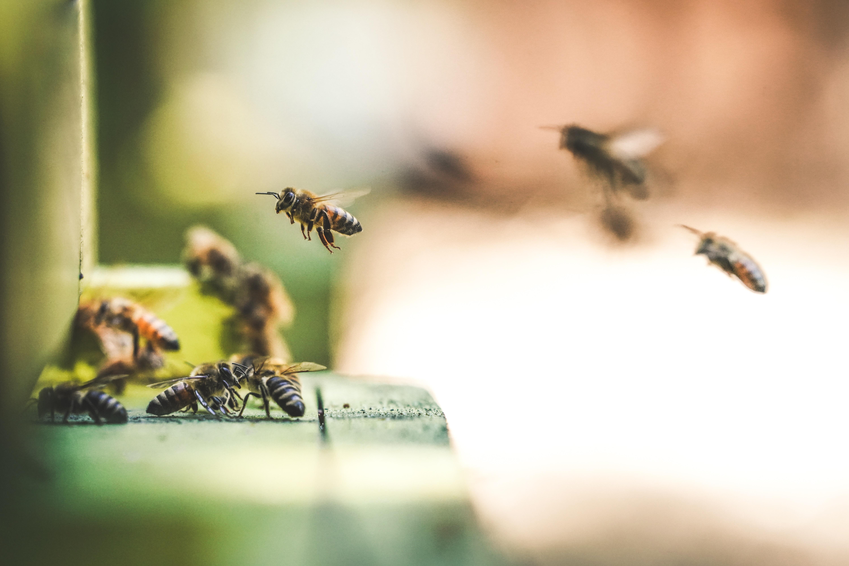 La primera batalla ganada de las abejas