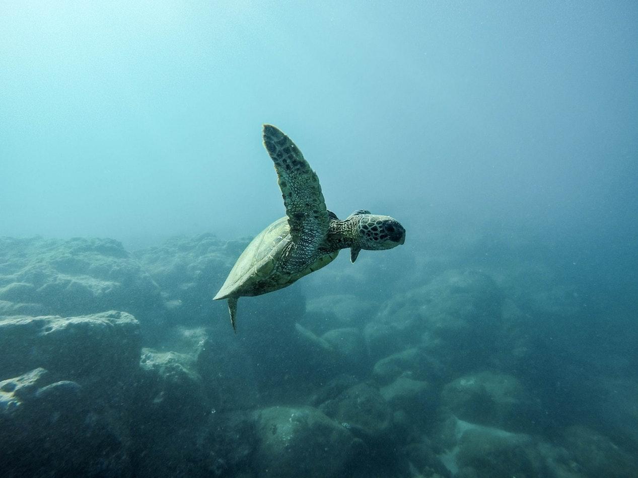 España, segundo país que más contamina el Mar Mediterráneo