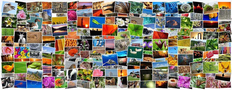 España, territorio de la biodiversidad